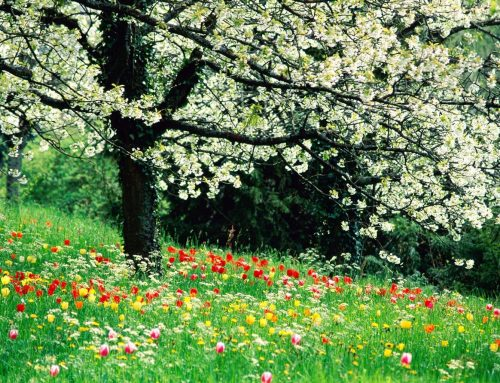 Ya tenemos aquí la primavera!